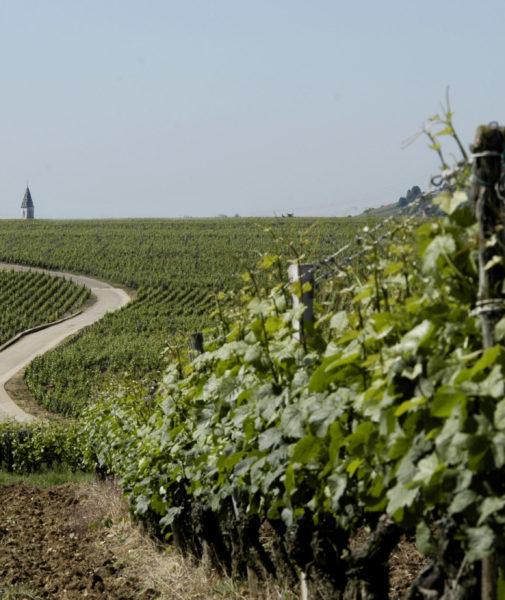 Partir à la découverte du vignoble