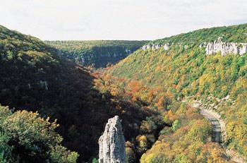 Combe Lavaux à Gevrey-Chambertin