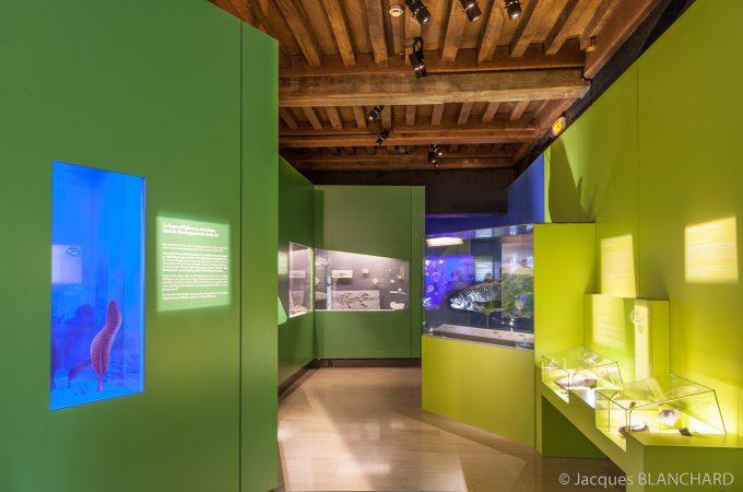 Jardin des Sciences – Muséum - 4