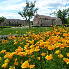 Abbaye de Cîteaux - 0