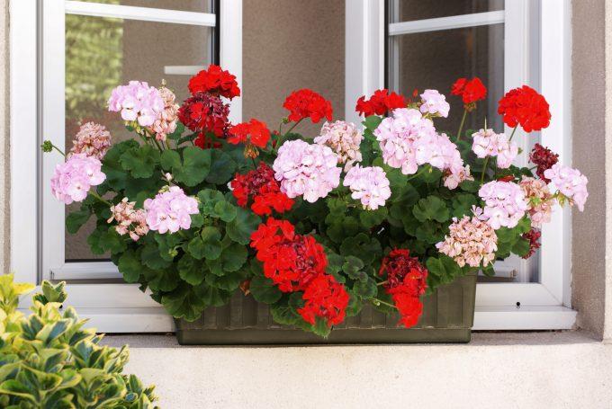 cour hotel wilson fleurs