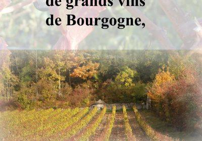 Dégustation de vins de Bourgogne et du Jura