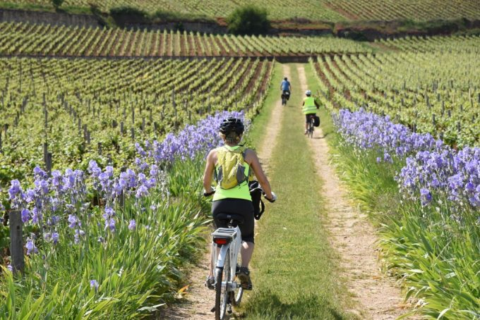 Burgundy-Bike-4