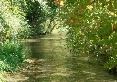 Balades naturalistes gratuites sur la nappe de Dijon Sud  et de la Cent Fonts (Fénay-Saulon-la-Rue,  Saulon-la-Chapelle, Noiron-Sous-Gevrey) – ENS2020 - 0
