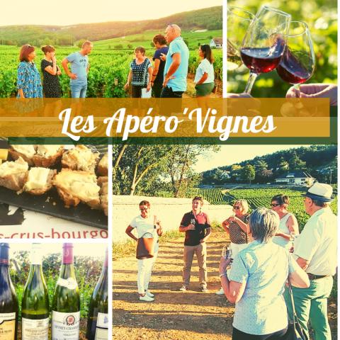 Clos de bourgogne, ateliers découverte «vigne et vin» - 5