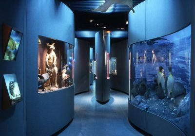 Jardin des sciences & Biodiversité – Museum - 8