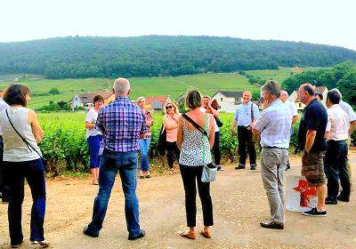 Clos de bourgogne, ateliers découverte «vigne et vin» - 3
