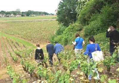 Clos de bourgogne, ateliers découverte «vigne et vin» - 4