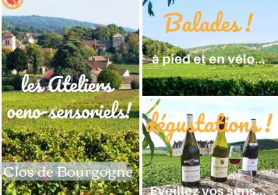 Clos de bourgogne, ateliers découverte «vigne et vin» - 0
