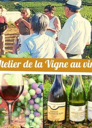 Clos de bourgogne, ateliers découverte «vigne et vin»