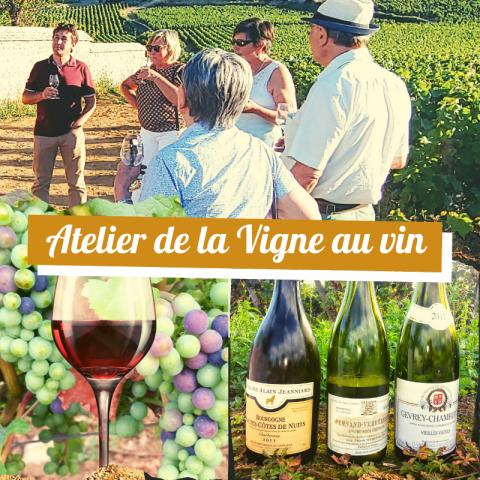 Clos de bourgogne, ateliers découverte «vigne et vin» - 10