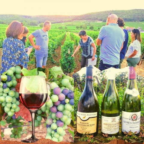 Clos de bourgogne, ateliers découverte «vigne et vin» - 1