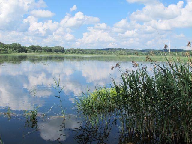 ENS de l'étang de Marcenay